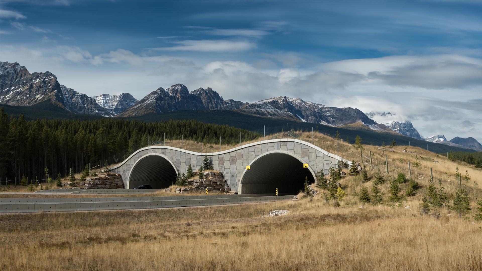 Wildlife Bridge picture from Steve Gadomski